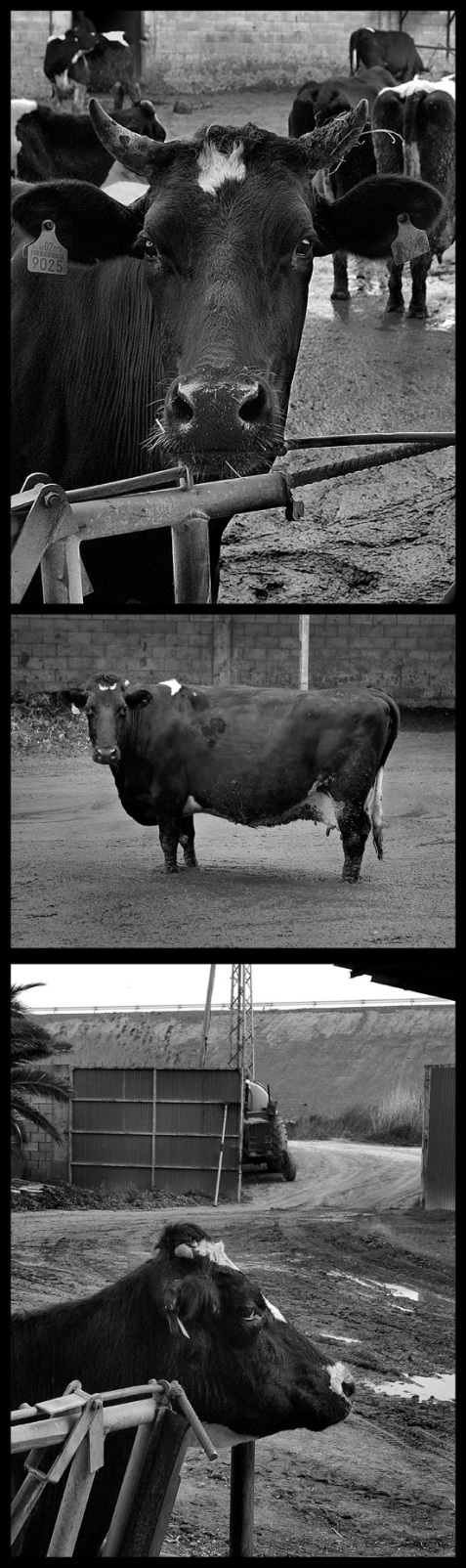 carne-y-leche-2.jpg